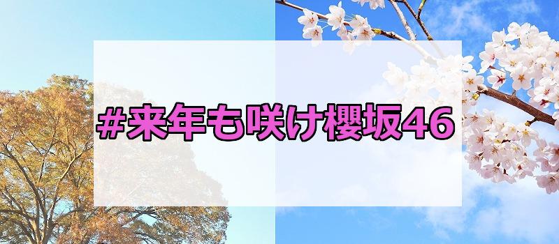 #来年も咲け櫻坂46